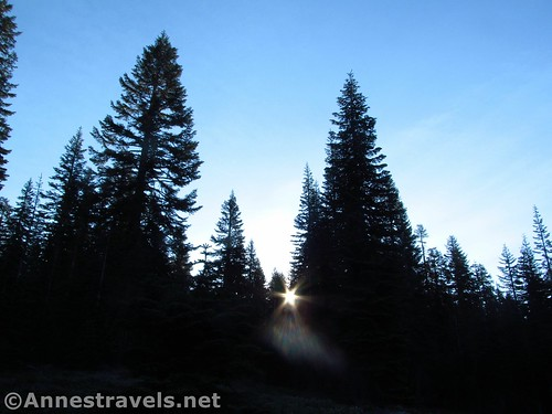 Sunrise along the lower reaches of the Bunny Flat Trail to the Horse Camp, Shasta-Trinity National Forest, California