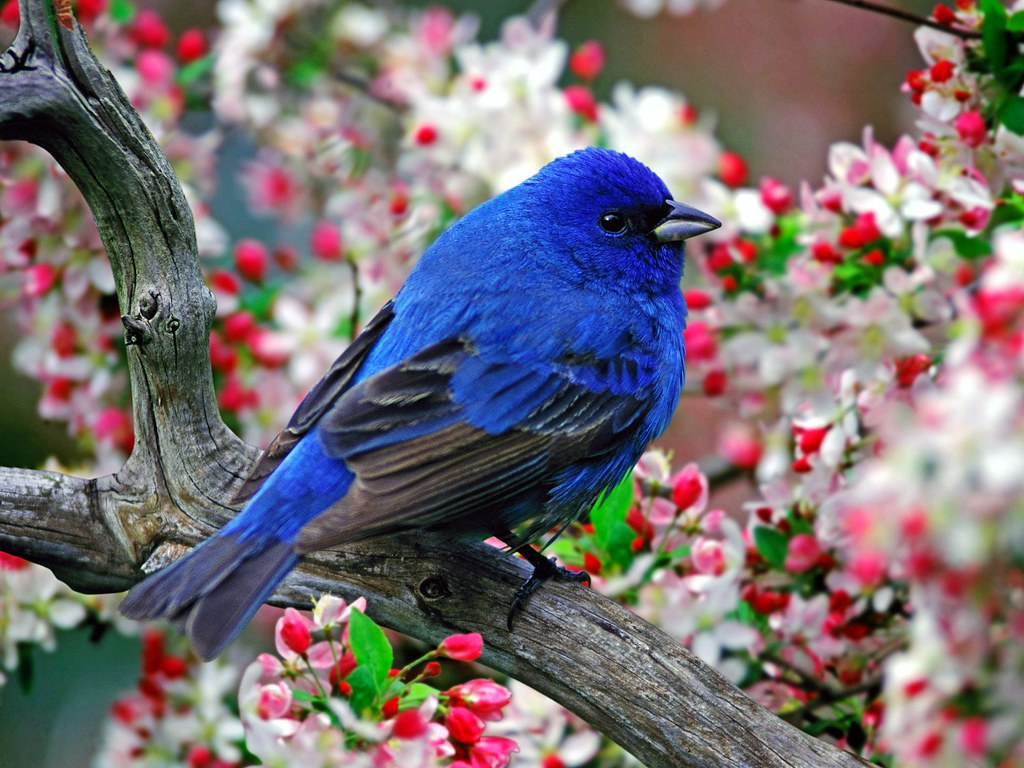 Colourful Birds Wallpaper Colourful Amazing Flying Birds