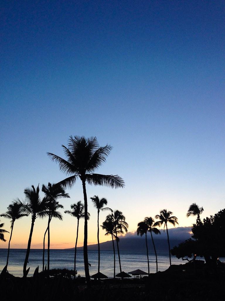 palm trees sunset tumblr. Hawaii Palm Tree Sunset | By Logan.hawk Trees Tumblr