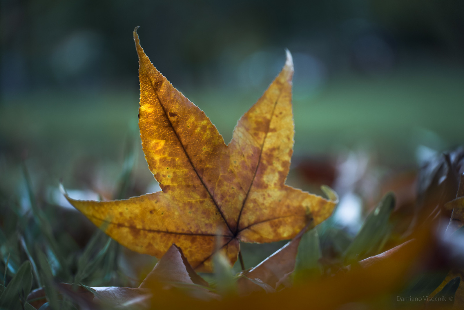 Signs of Autumn_3