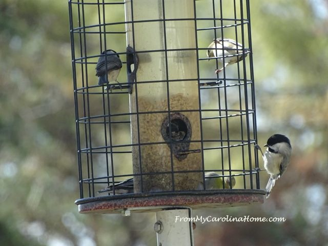 Chicadee March 2017