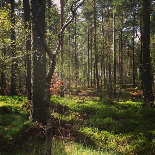 Woodland . #woodland #trees #summer #woods #forest #scotland #scottishscenery