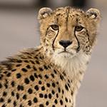 Kruger-Addiction: Cuarta visita por libre al Parque Nacional Kruger (Sudáfrica)