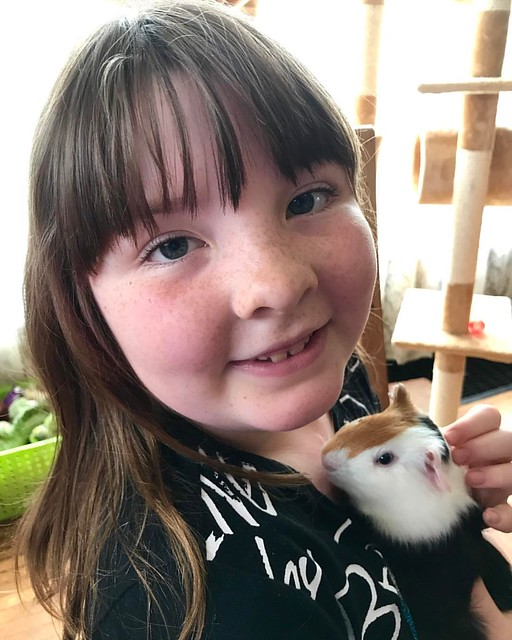 Lucy asked for a guinea pig for her birthday. Say hello to Spotty.