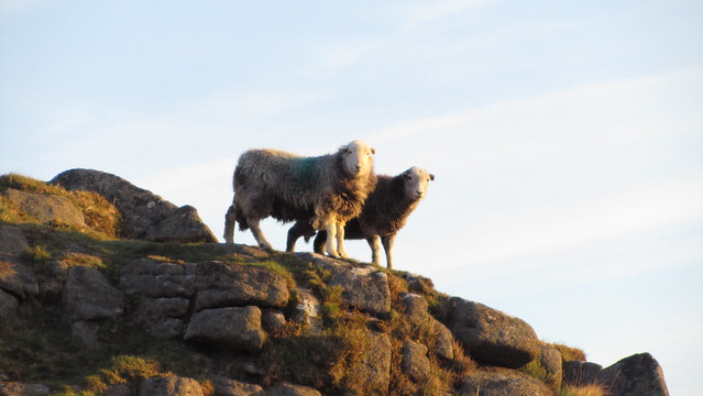 Locals enjoying the first rays of the sun on Belstone Common