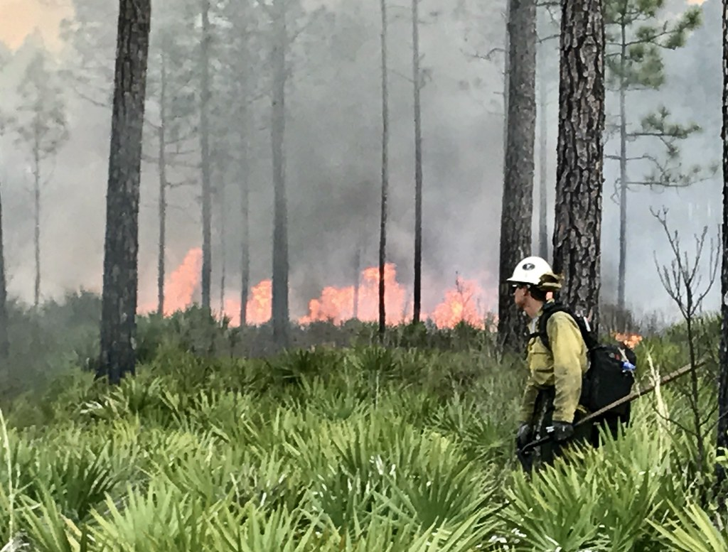 West Mims fire at Okefenokee NWR