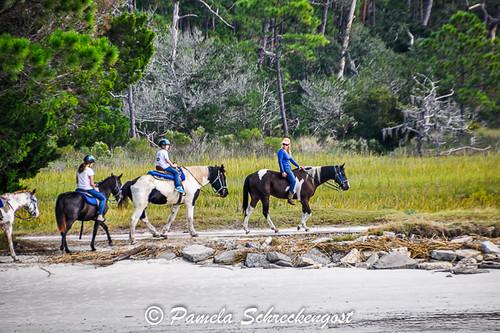 St Simons Island Horses