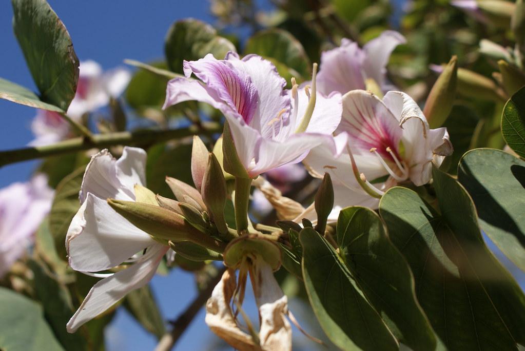 Fleurs extraordinaires du Jardin Secret de Marrakech au Maroc.