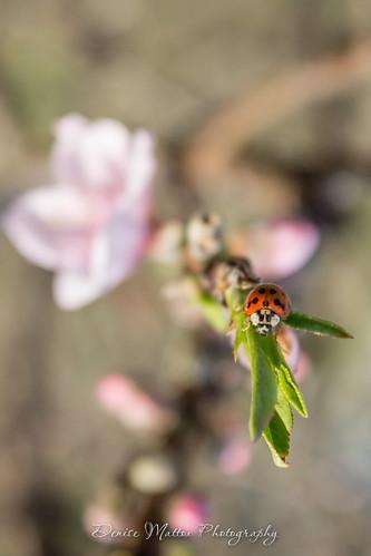 082/365 : Lady Bug