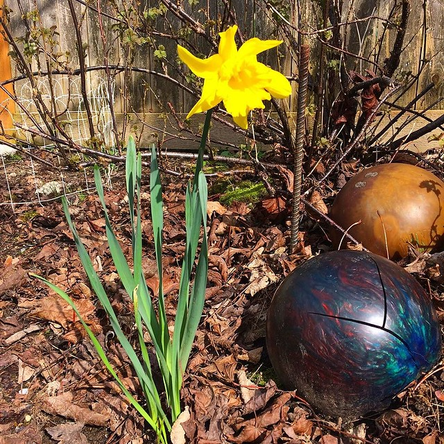 Spring hits the bowling ball garden.