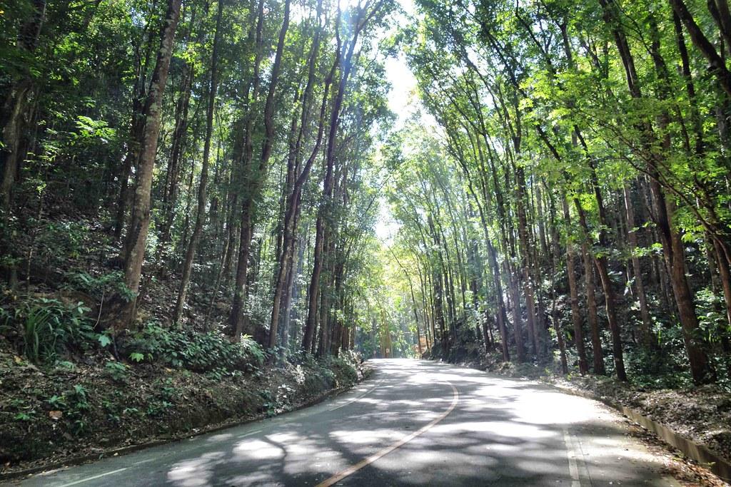 Bohol - Bilar Forest