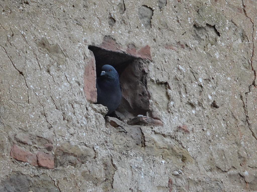 Nest guard | Melike Yersiz | Flickr