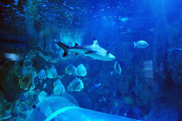 Sealife Adventures Related Keywords & Suggestions - Sealife Adventures ...