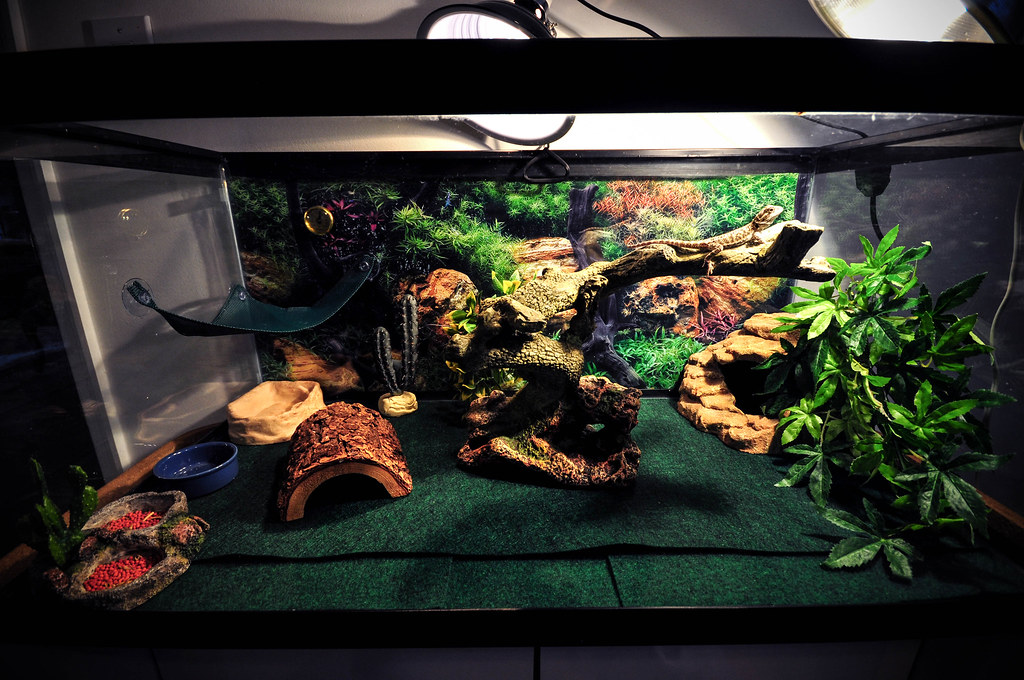 Doobie The Bearded Dragon S Terrarium This Is A 10mm
