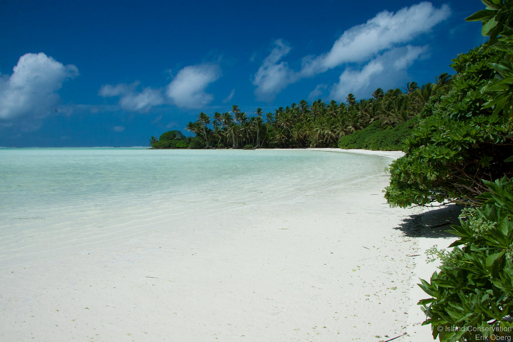 Credit Report Com >> Palmyra Atoll NWR. Photo credit: Erik Oberg/Island Conserv ...