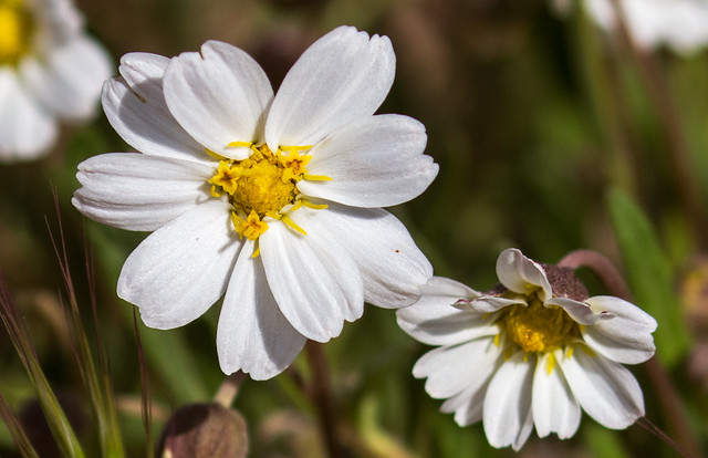 Wild-Flowers-7-7D2-032717