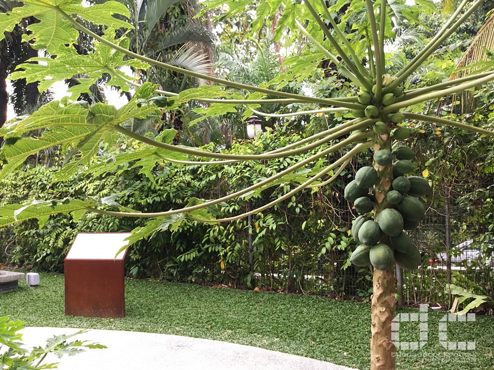 fall of singapore, ford factory, ford motor factory, japanese occupation, museum, old ford factory, second world war, syonan, world war 2, ww2, wwii,syonan gallery,syonan garden,papaya