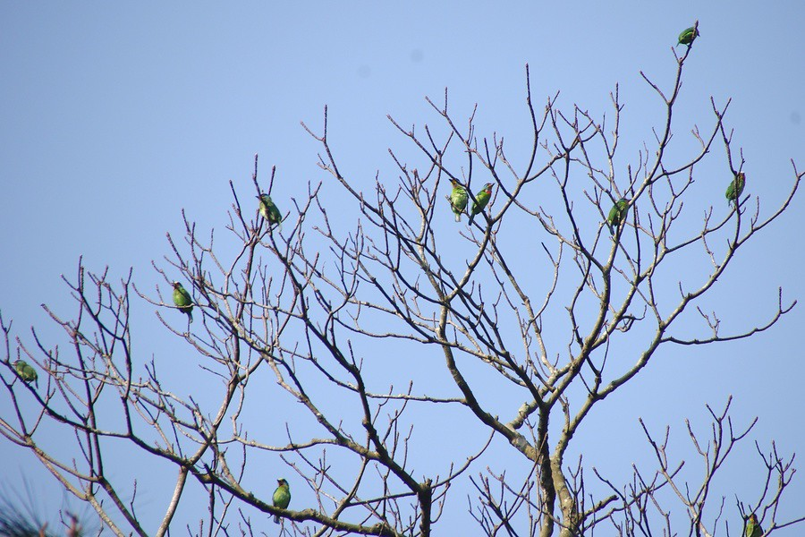 想知道是什麼樣的鳥,會同時出現在同一棵樹上嗎?