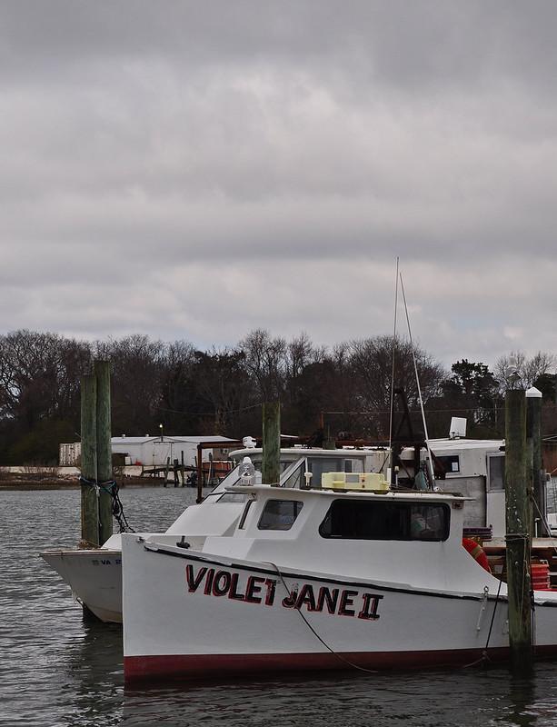 Oyster, Virginia (2)