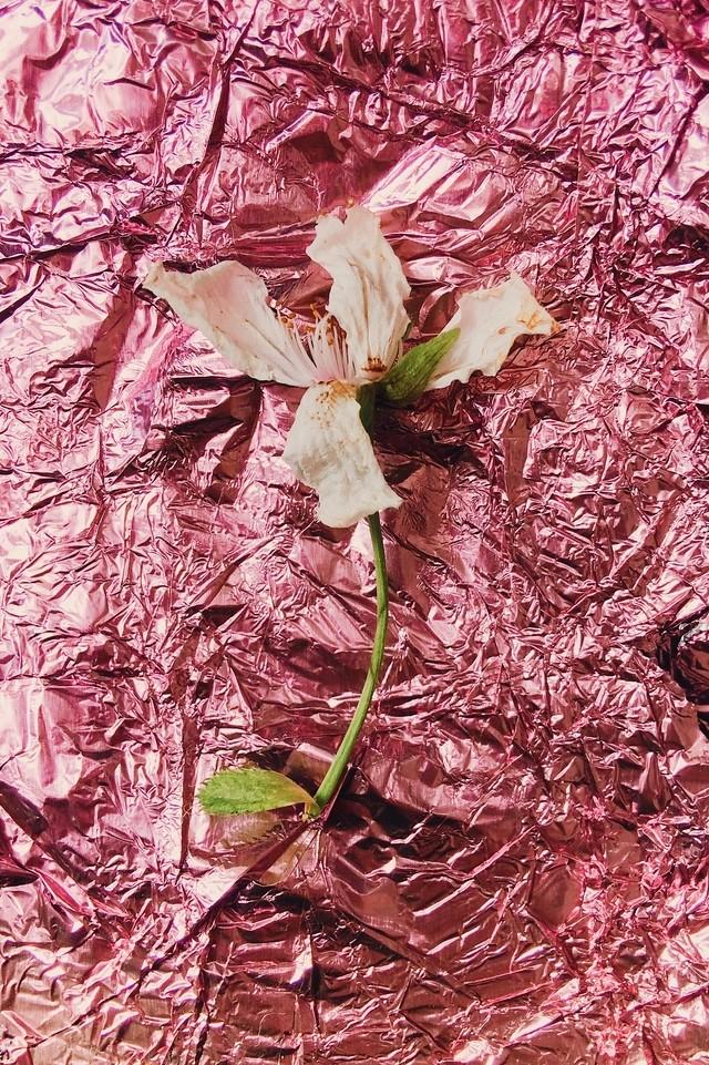 blossom on pink foil
