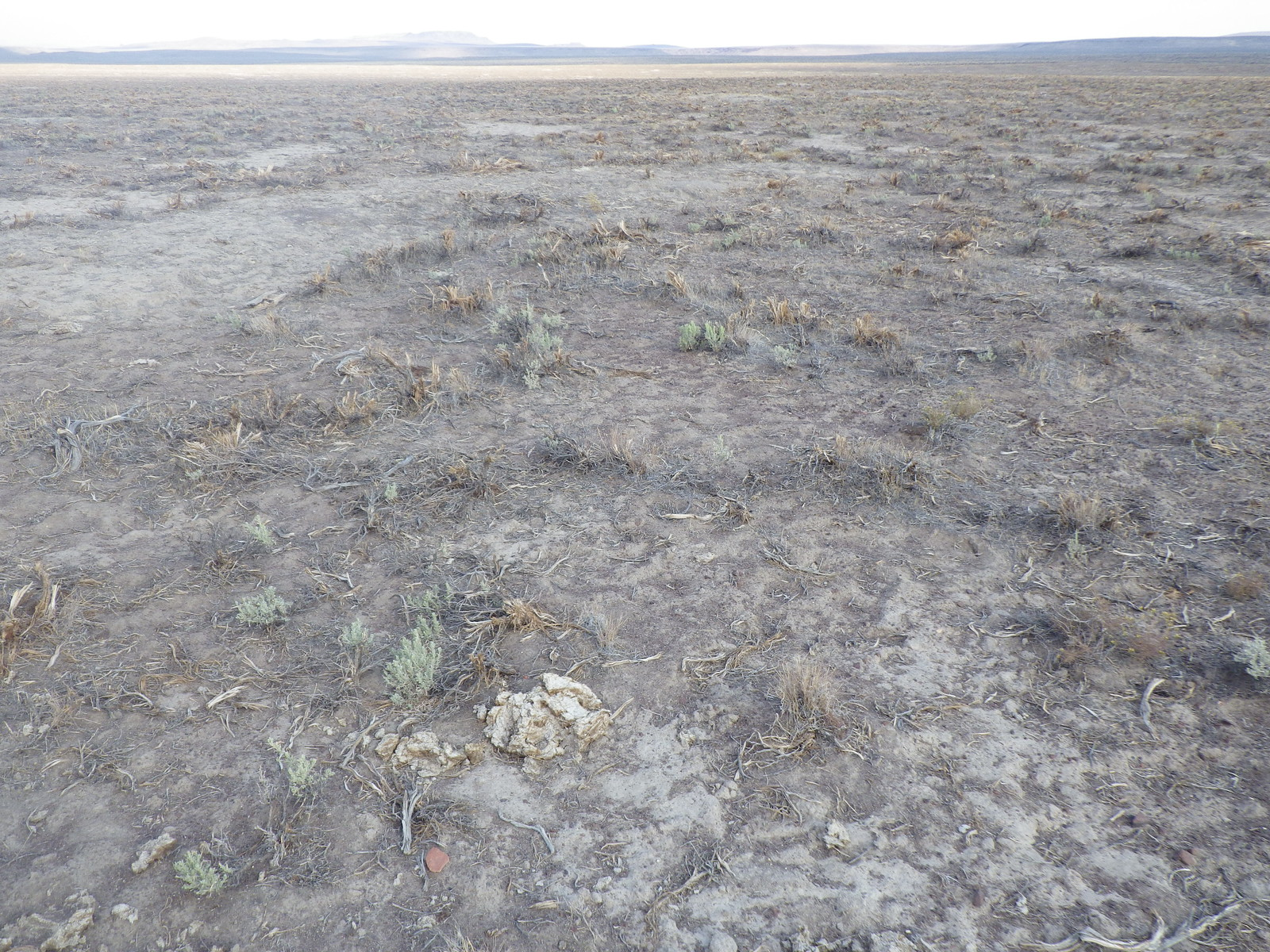 E of Burns Junction: Wyoming big sagebrush steppe (mowed or chained) | by Matt Lavin