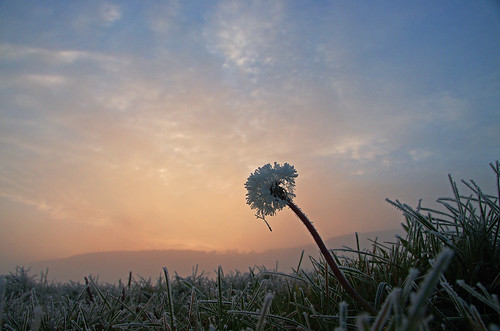 frozen blowball | by Lutz Koch