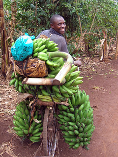 Farmer transports bananas to market on a bicycle in Uganda | by IFPRI