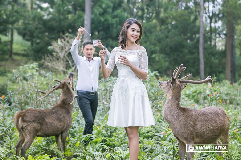 Prewedding with Deer