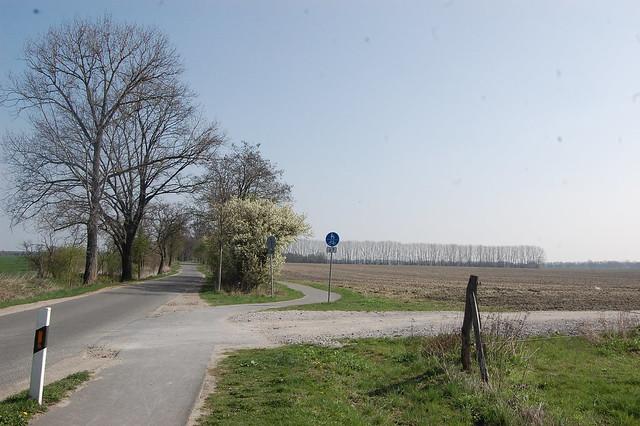 blauer Himmel, Felder, Blühende Sträucher