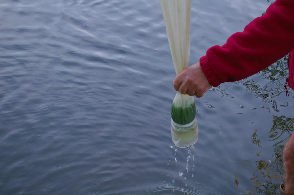 plan d'eau, analyse, bras