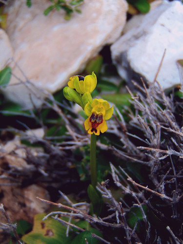 Among the rocks we found this unidentified orchid for Eleni to add to her collection