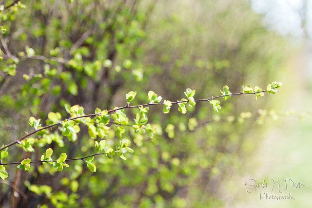 Bokeh Bushes