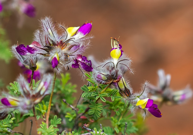 A-Flower-150-7D2-041017
