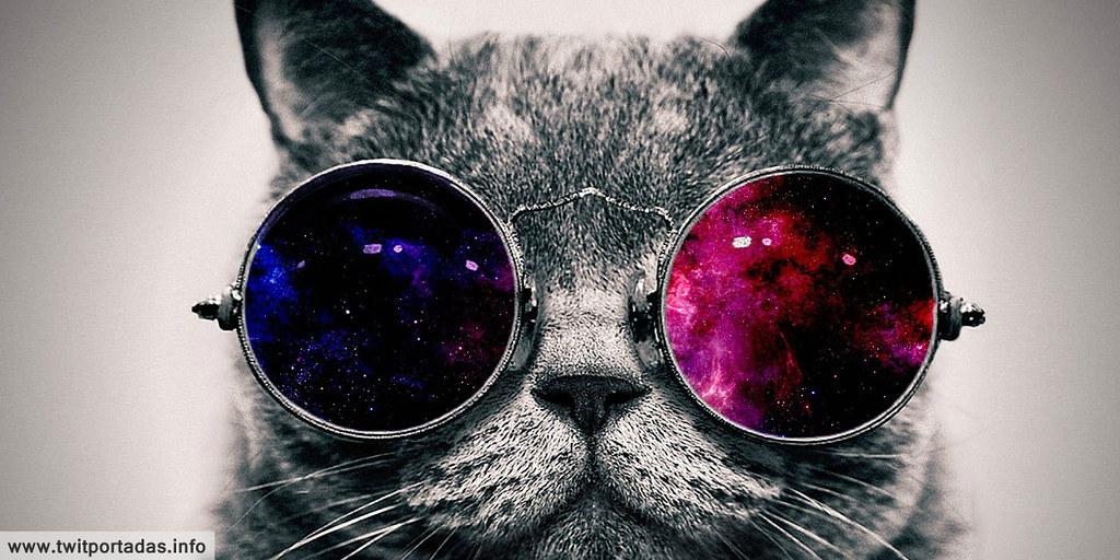 Encabezado para twitter de gato de otro espacio