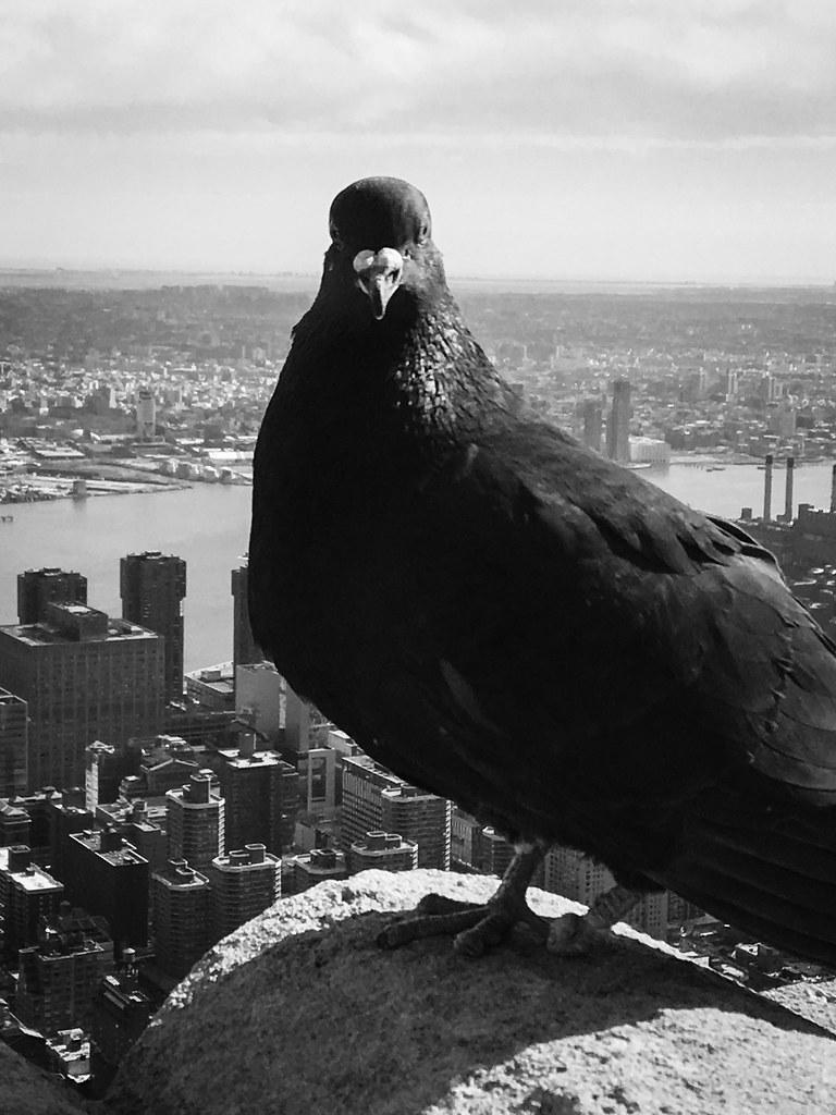 newyorkvacationbw2017-0491