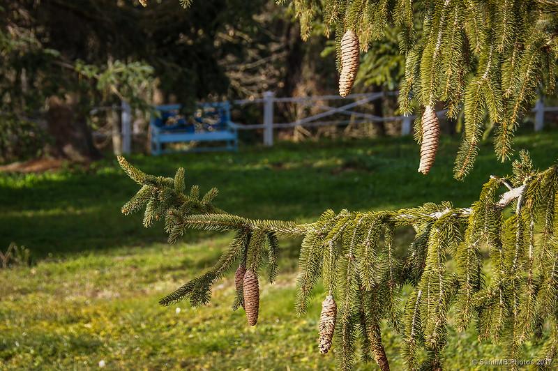 Jardín de abetos del Campàs