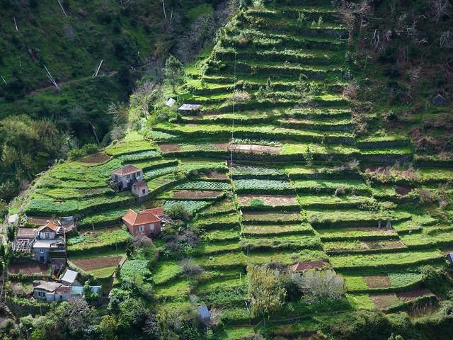 Bancales en Madeira