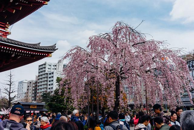 Tokyo_Asakusa_06