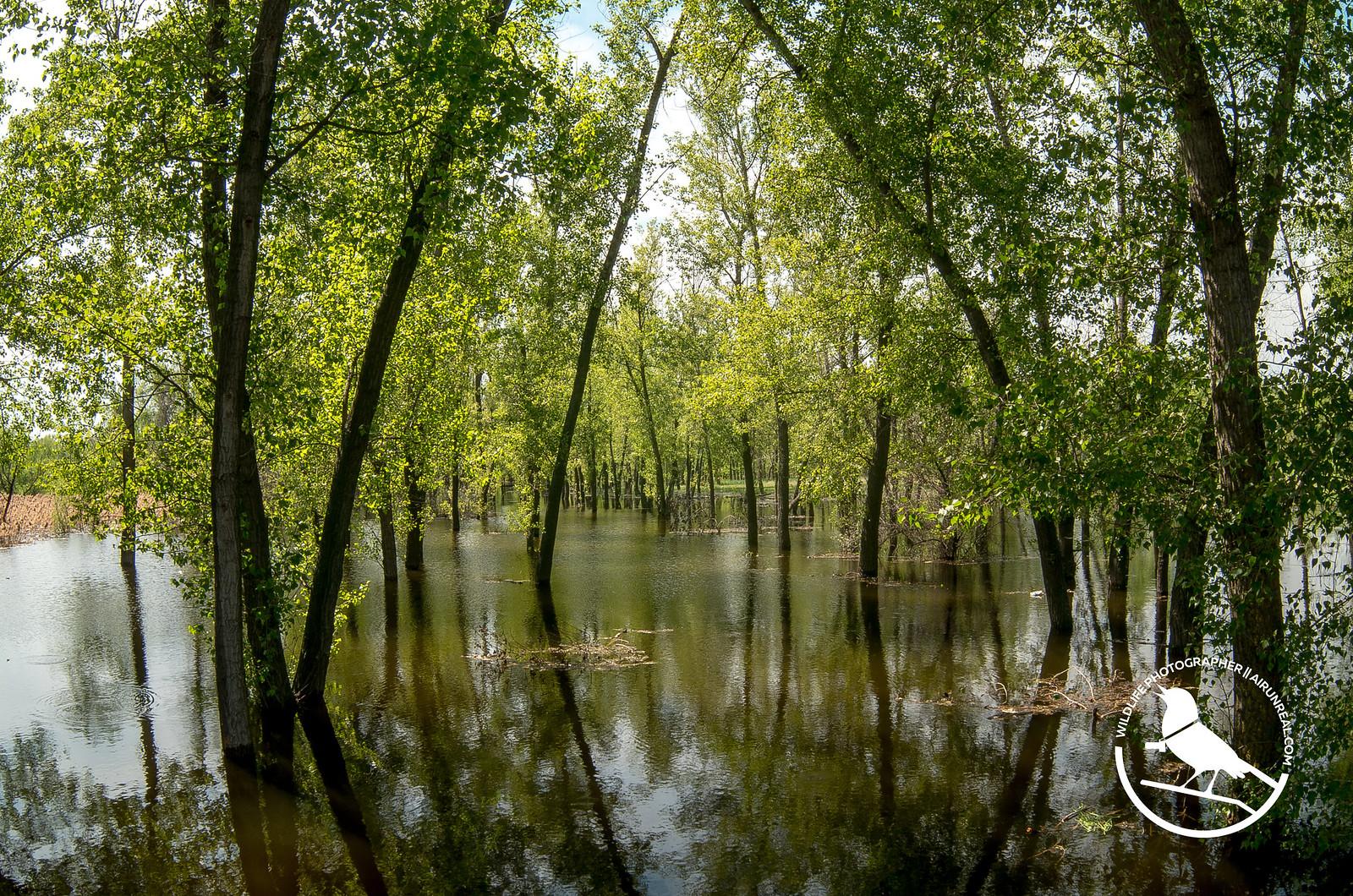 Ahtuba river spring // 16042017