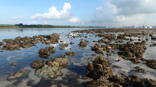 Living reefs of Terumbu Semakau, Apr 2017