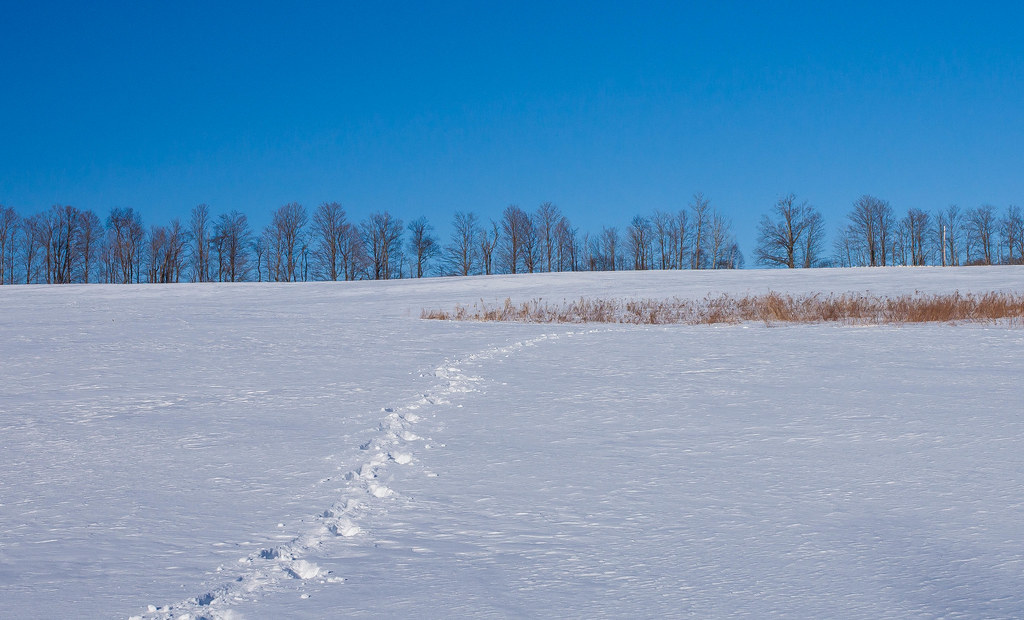 Winter landscape, with animal tracks, possibly a wild phot ...