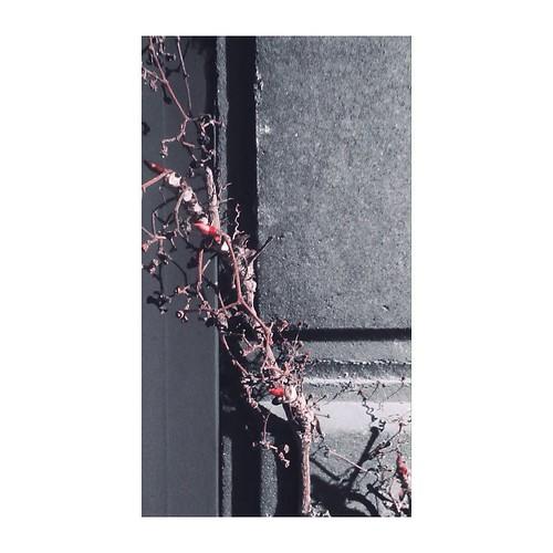 April 10 - Flora