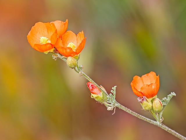 Flower-146-7D2-041017