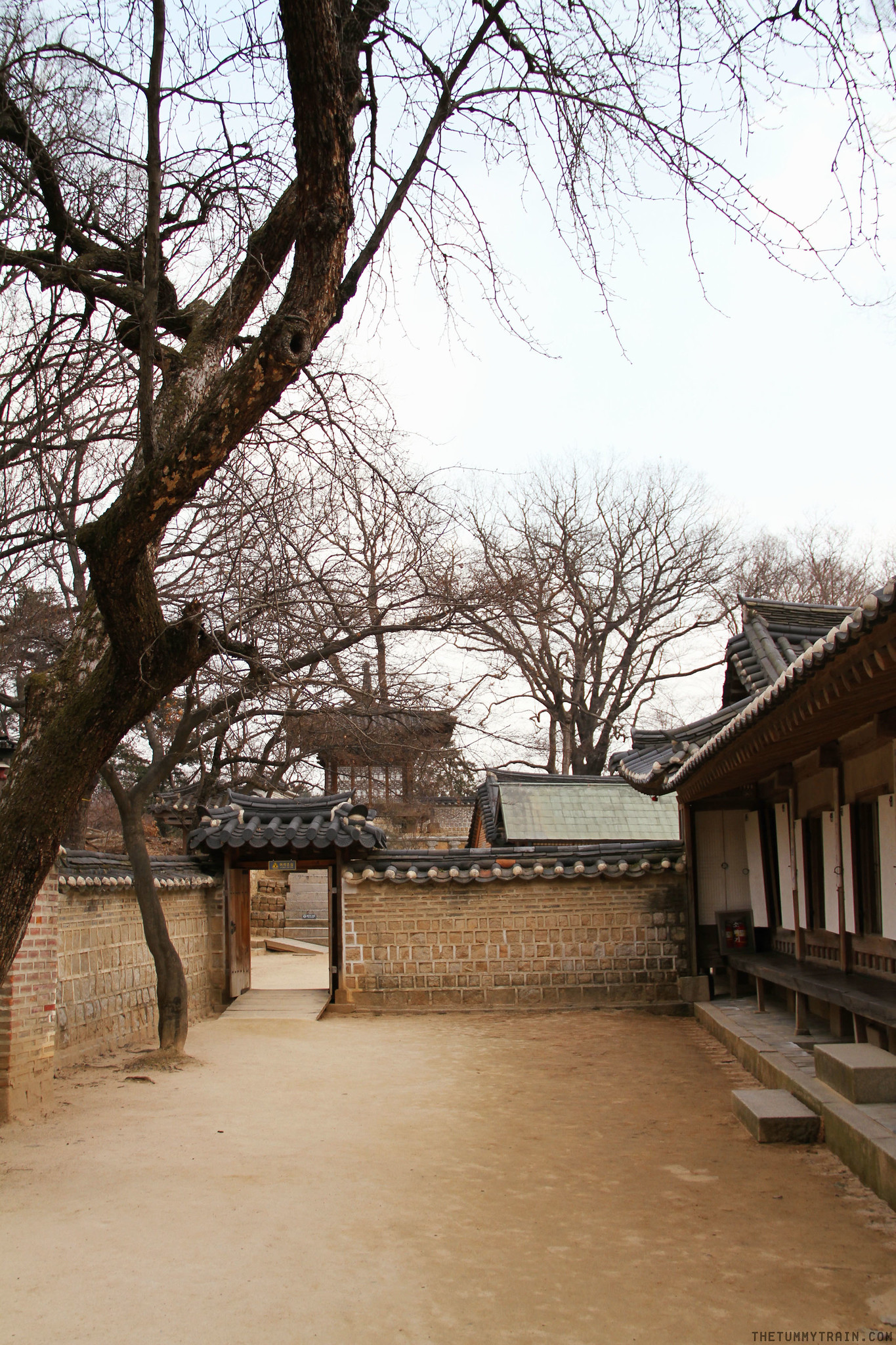 33373093752 8ea26c558b k - Seoul-ful Spring 2016: Greeting the first blooms at Changdeokgung Palace