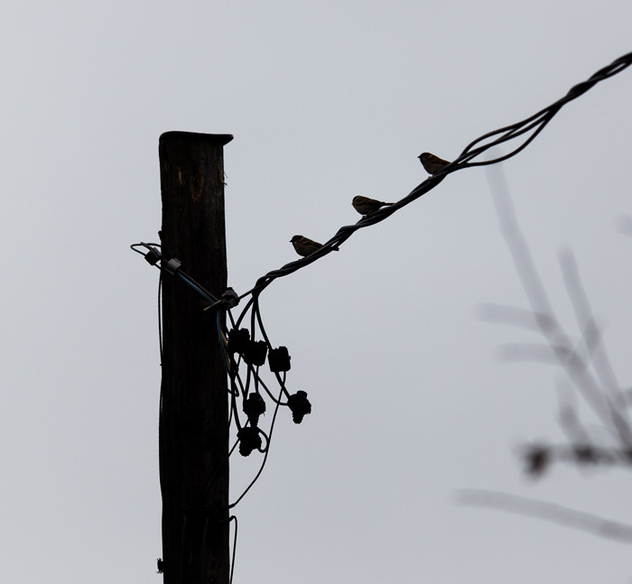 siluetti musta lintu puhelintolppa linnut langalla