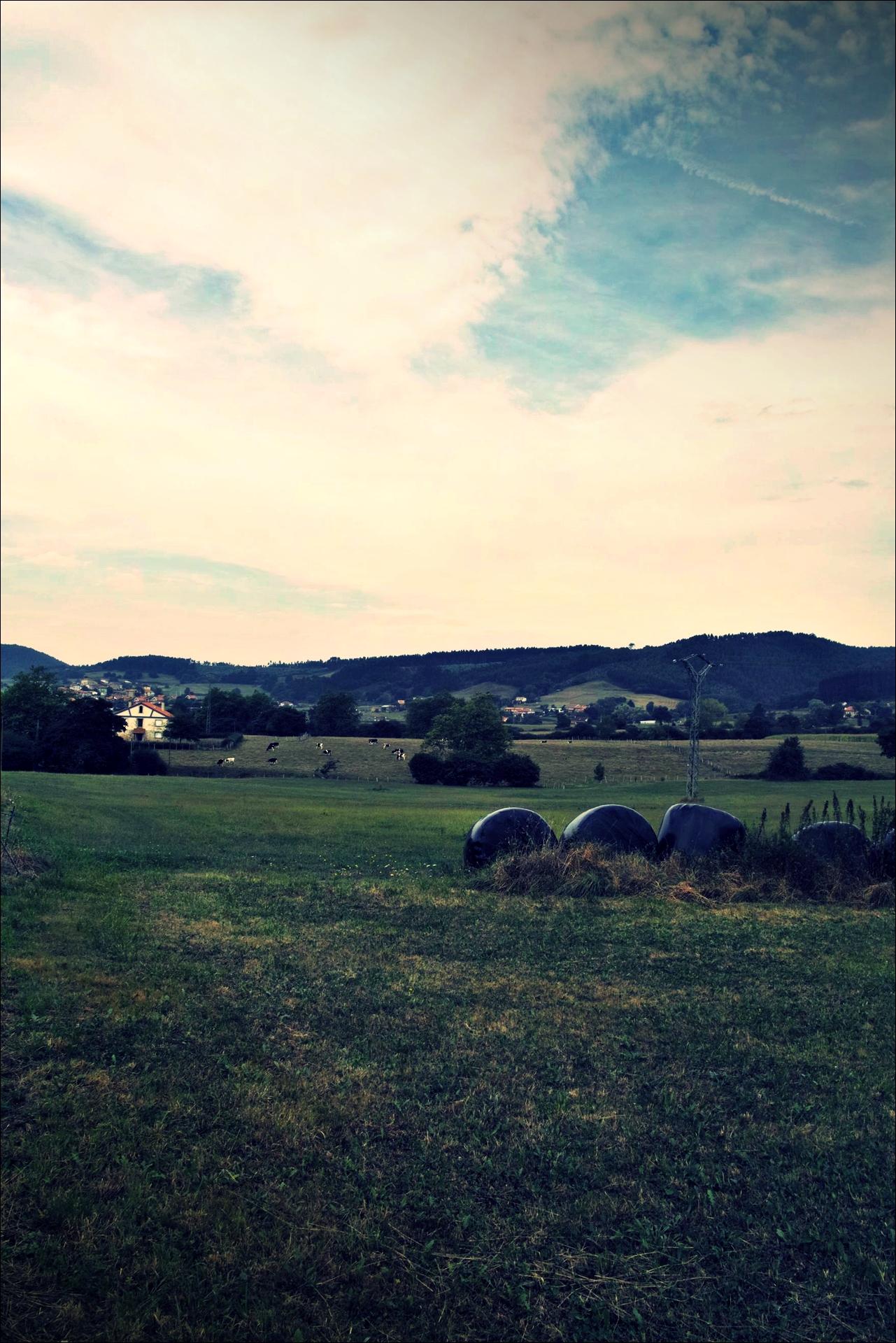 목초지-'카미노 데 산티아고 북쪽길. 노하에서 궤메스. (Camino del Norte - Noja to Güemes)'