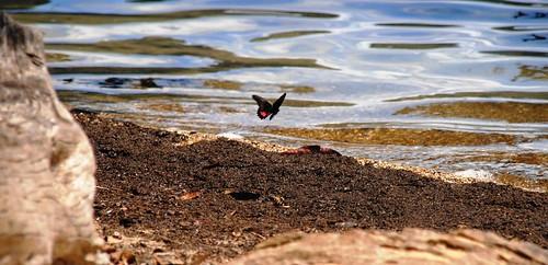 57 Laguna Miramar (18)
