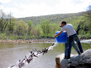 Fall Trout Stocking Begins in Maryland