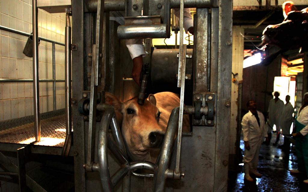 02 Lr Slaughterhouse The Quot Knock Box Quot On The Killing