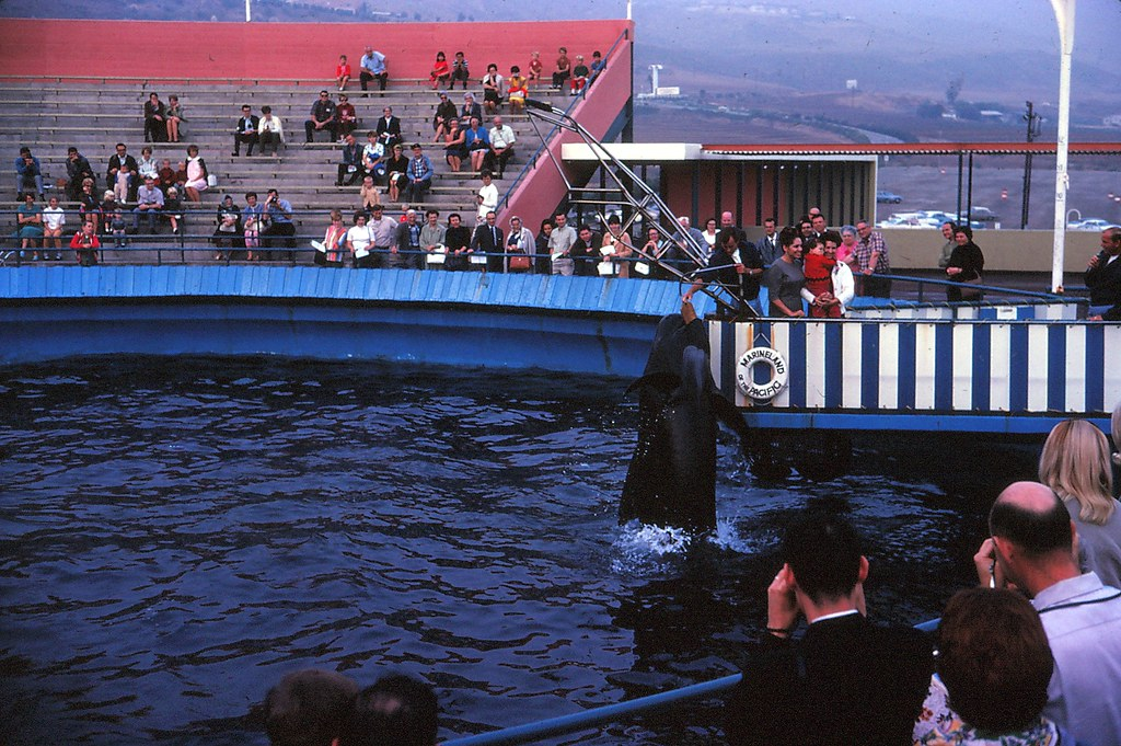 #439 1966 California, Marineland of the pacific | Yvonne ...